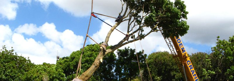 Tree Relocation Services - Trees South Africa