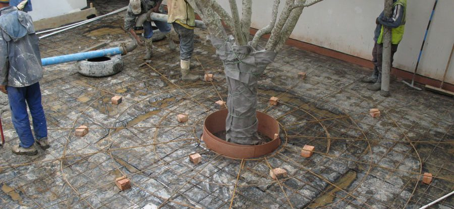 Planting a big tree