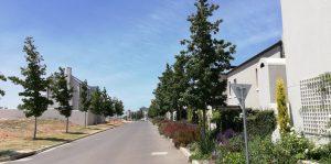 nooitgedacht village estate trees 2019