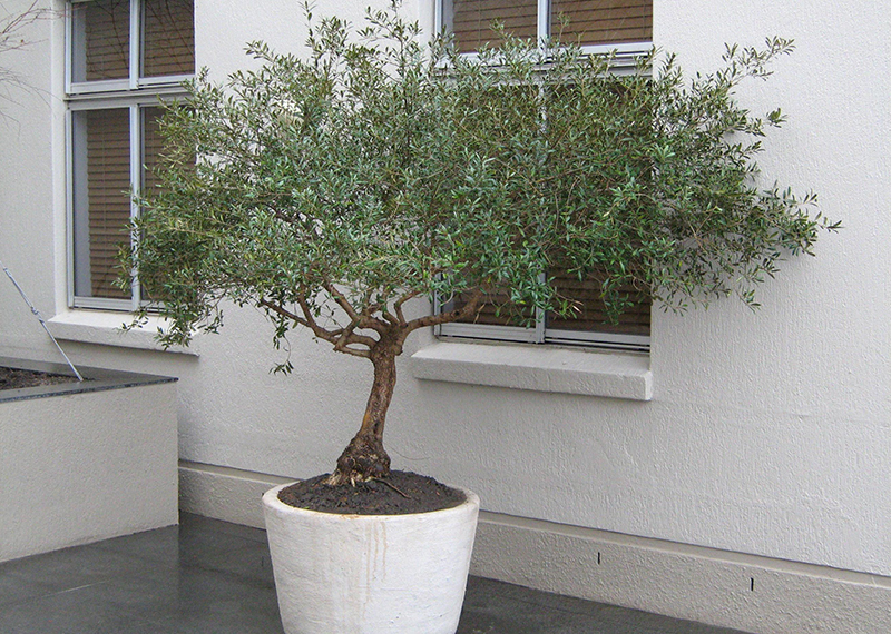 Trees South Africa Small Garden Containerised Gardens The Best Solution