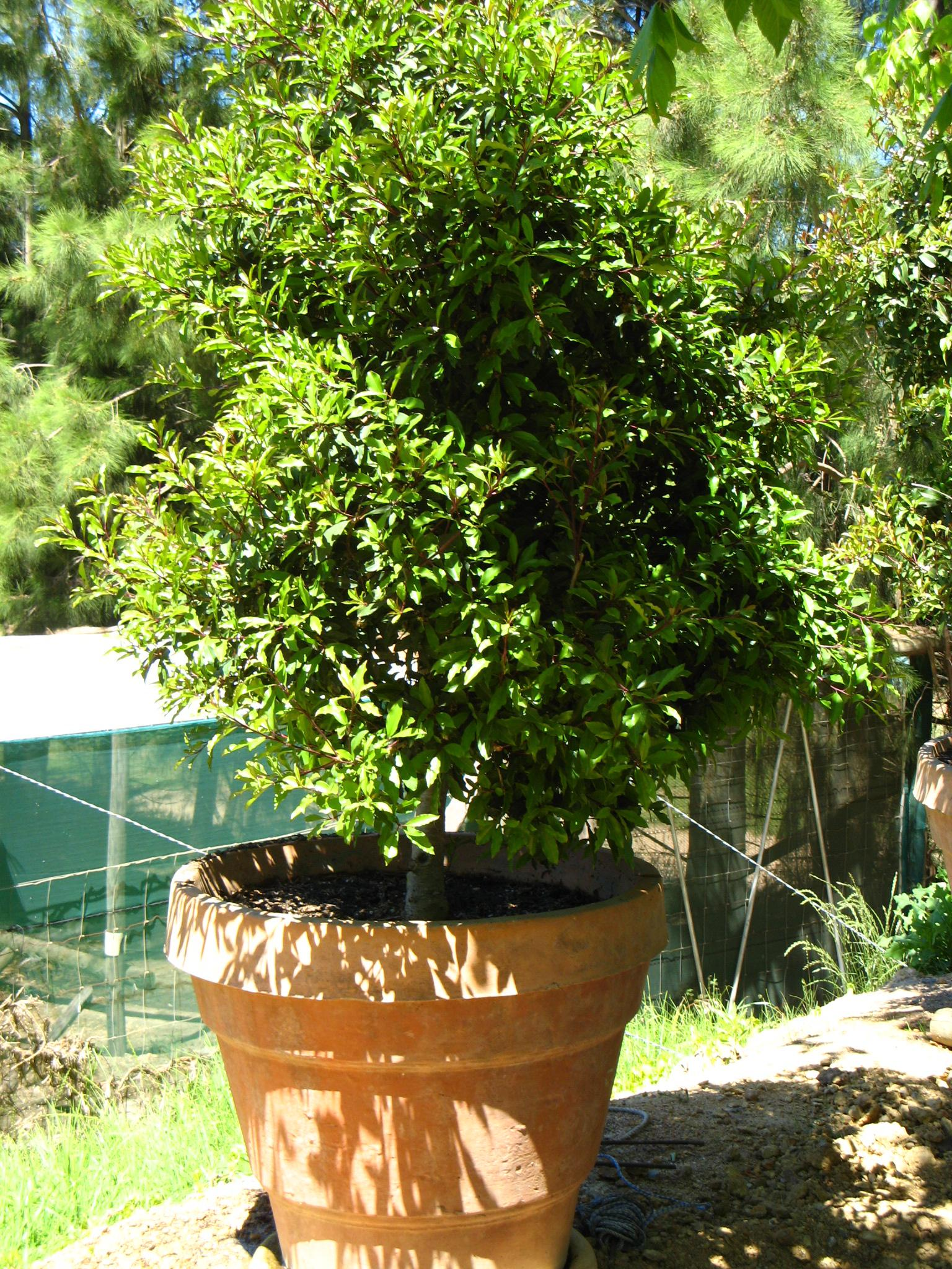 Trees South Africa Small Garden Containerised Gardens The Best