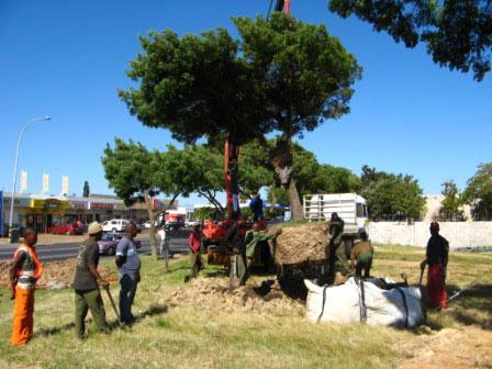 Truck offloading trees