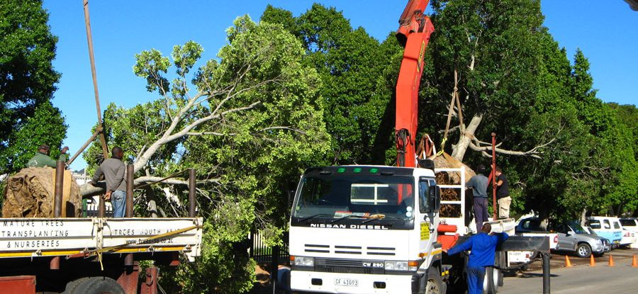 Trees SA - Trucks loading trees