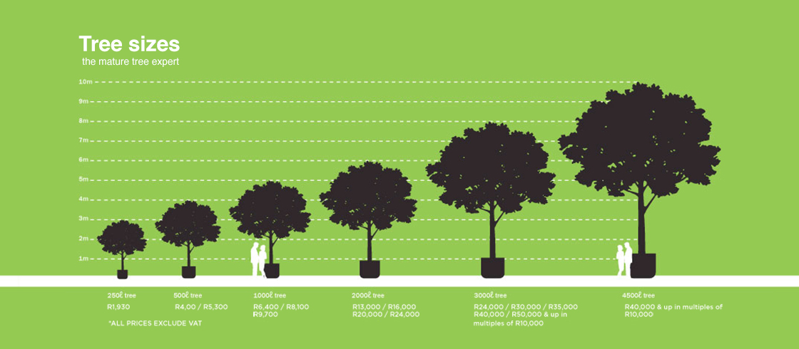 Tree size and price chart