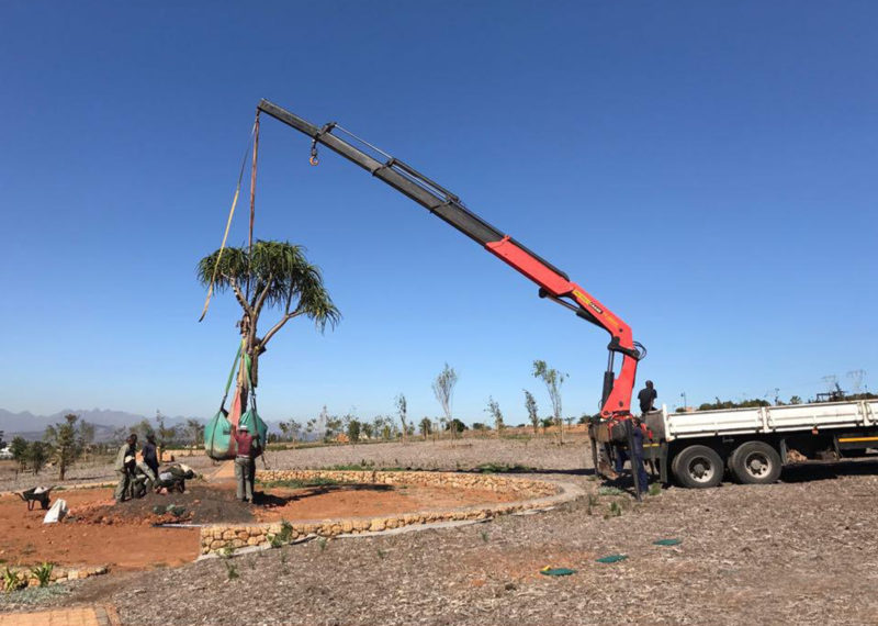 Fontein Estate tree getting hoisted by crane