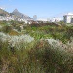 urban ecosystem; gardens