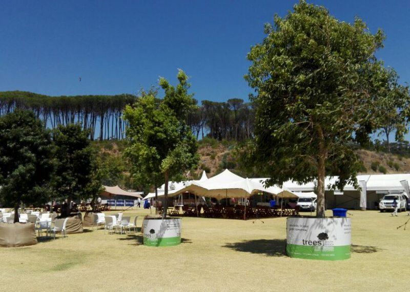 wine; festival; trees