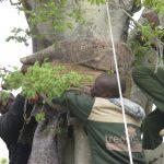 mature tree transport