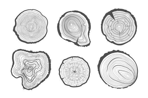 tree trunks cross section
