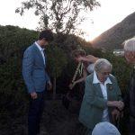 marriage tree planting