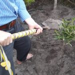 soil on marriage tree