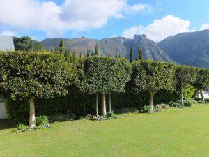 Topiary Garden - Ilex mitis