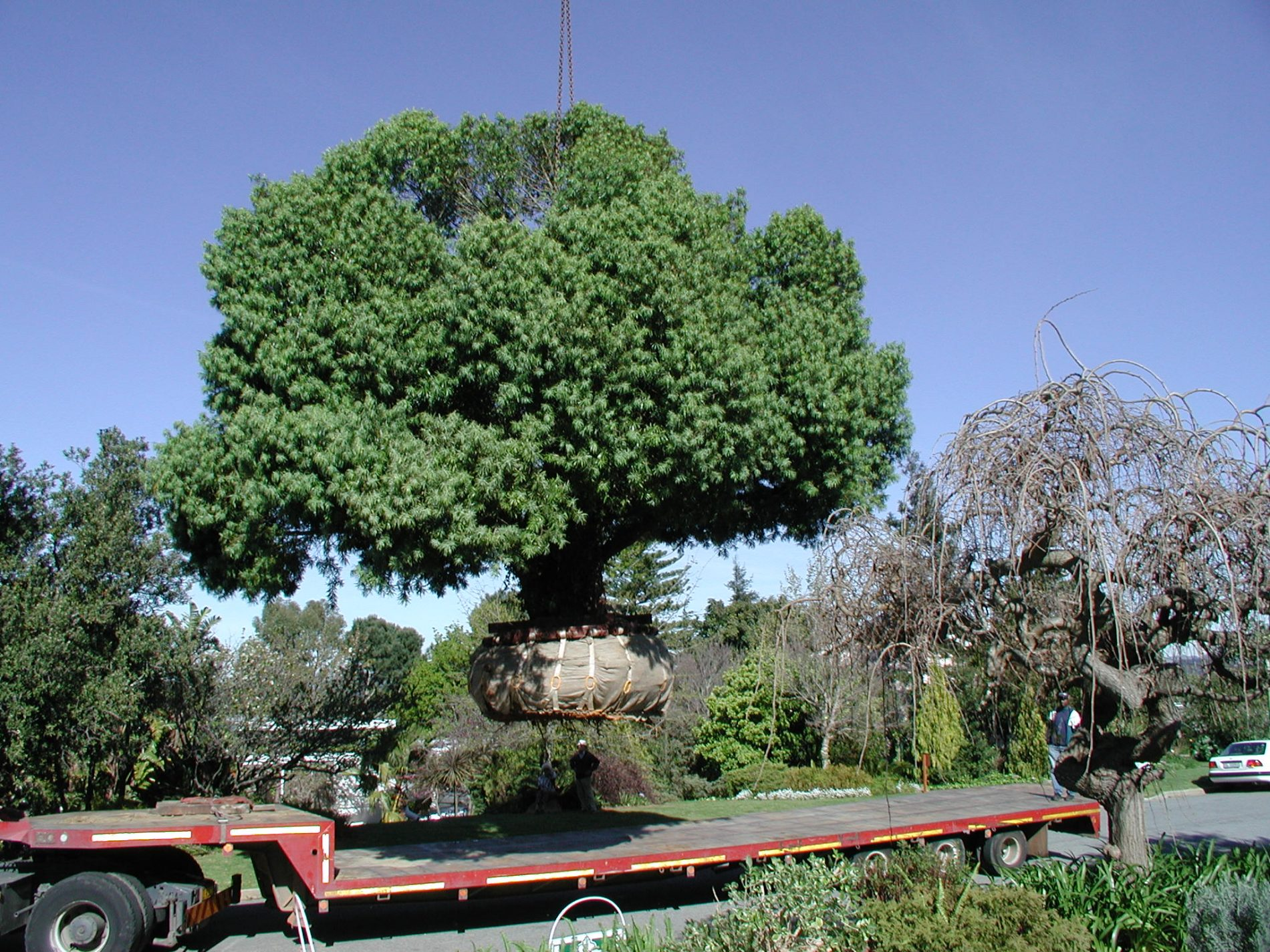Is It Possible To Sell A Mature Tree